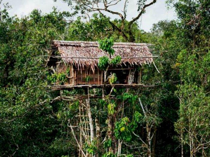 rumah pohon korowai